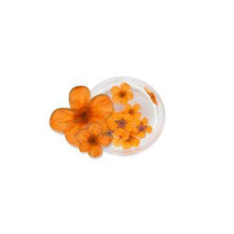 Flori naturale Orange